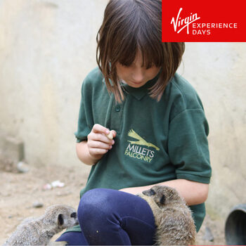 Virgin Experience Days Junior Animal Keeper Experience for 1 Child at the Millets Farm Falconry Centre (8 Years +)