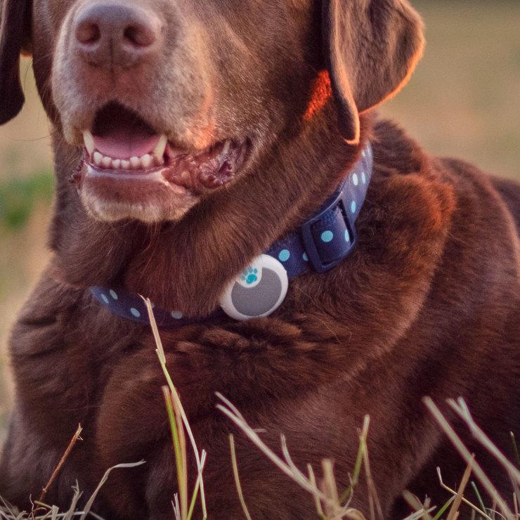 Sure Petcare Animo Dog Activity And Behaviour Monitor Costco Uk