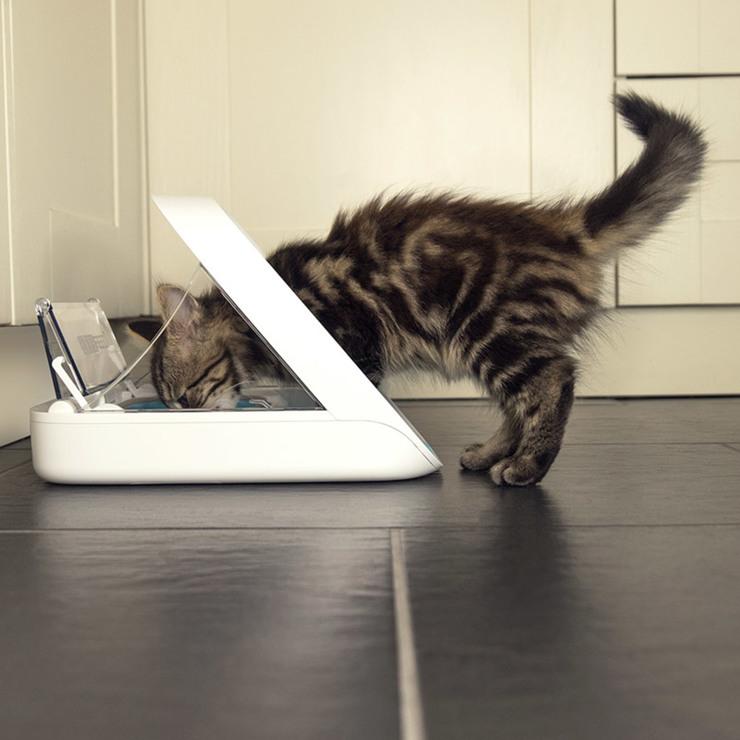 kitten breast feeding